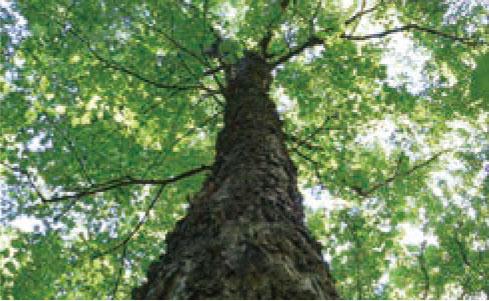 良質な銘木を厳選